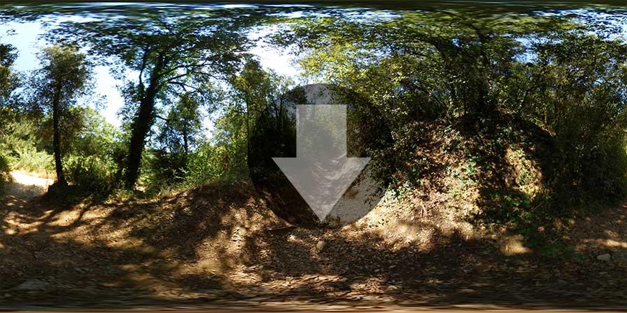 Imagen-360-en-el-bosque-preview-900x450-descarga
