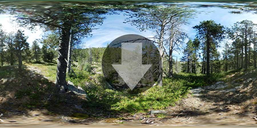 Miniatura-web-Fotografia-360-grados-En-el-bosque-03-GrupoAudiovisual-Descargas360