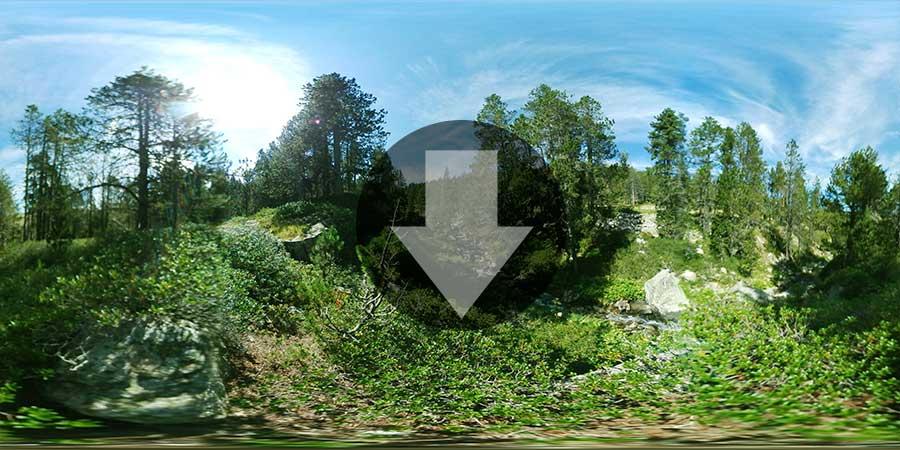 Miniatura-web-Fotografia-360-grados-En-el-bosque-04-GrupoAudiovisual-Descargas360
