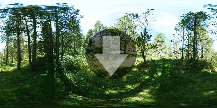 Miniatura-web-Fotografia-360-grados-En-el-bosque-05-GrupoAudiovisual-Descargas360