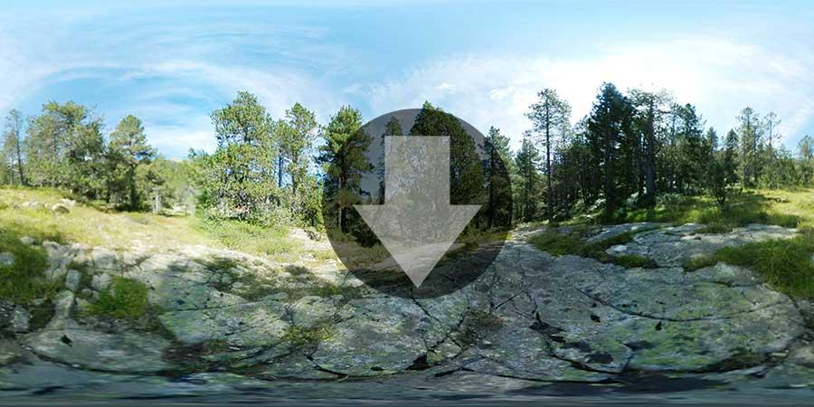 bosque 360 Miniatura-web-Fotografia-360-grados-En-el-bosque-GrupoAudiovisual-Descargas360