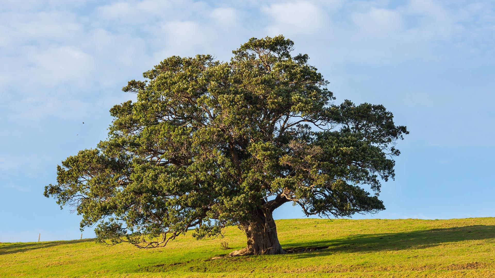 Árboles - FOTOS y VÍDEOS 360 para descargar - Descargas360.com