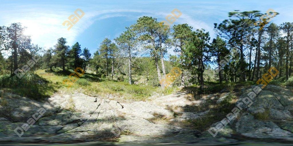 Bosque-suelo-rocoso-360-naturaleza---Descargas360_preview