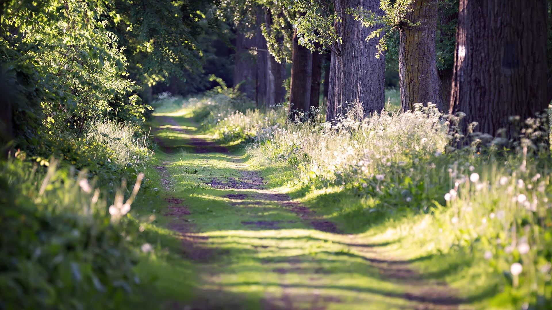 Camino - FOTOS y VÍDEOS 360 para descargar - Descargas360.com