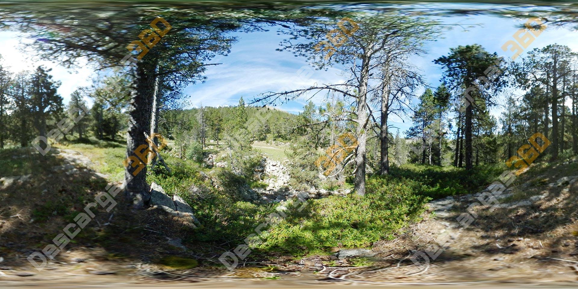 Camino-de-bosque-con-raíces-360-Naturaleza---Descargas360